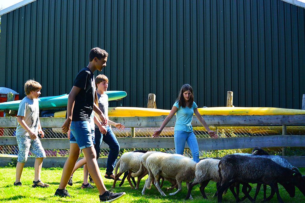 Avonturenkamp schapendrijven